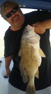 Large Freshwater Sheepshead Drum Fish