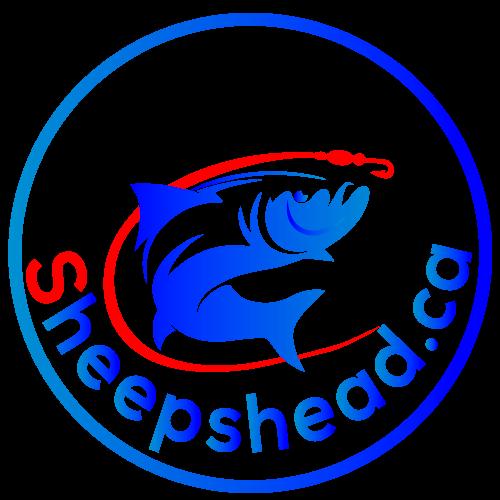 Sheepshead Fishing, Saltwater Fish Deep Sea Fishing