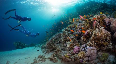 Best Coral Reefs to Scuba Dive