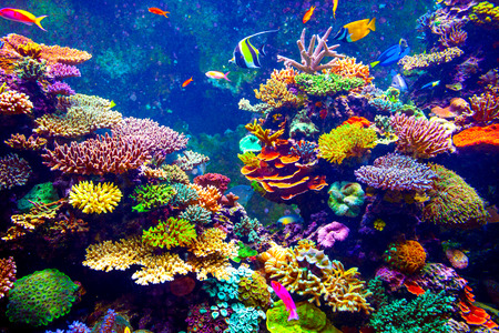Coral Reef Facts and Secret to Life in our Oceans