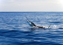 Deep Sea Fishing Marlin Billfish