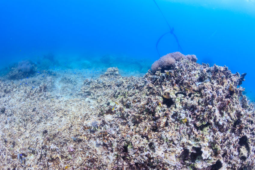 Dead Coral Reef Photograph