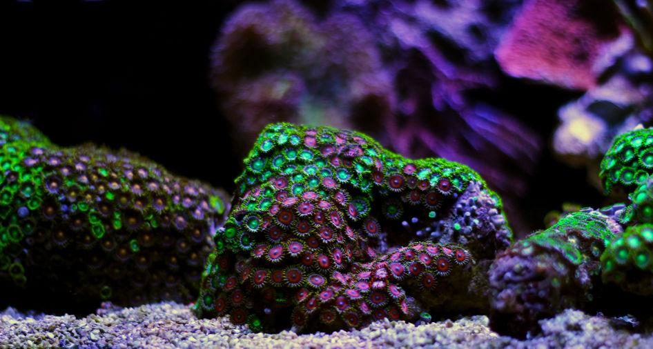 Ocean Reef Fact Coral is Alive