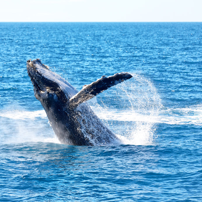 Beautiful Whale Watching Images
