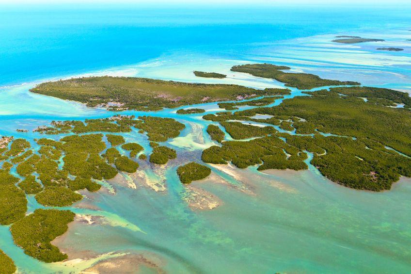 Florida Keys Coral Scuba Diving