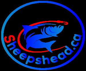 Black Drum Fishing at Sheepshead.ca
