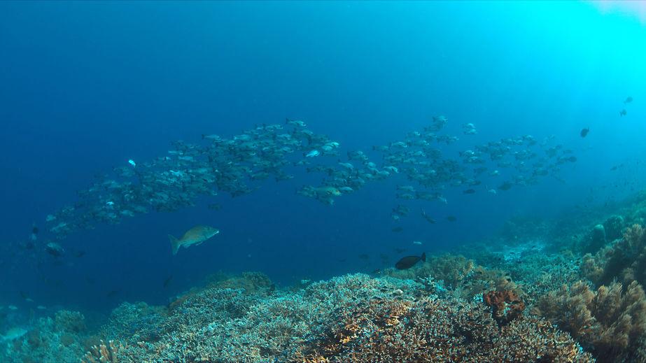 Tubbatah Ocean Reef Scuba Diving